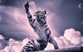 Tigre, pata, nuvens, imagem em preto e branco