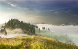 Trees, grass, hills, fog, morning