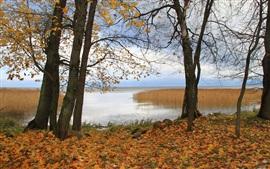 Árvores, lago, grama, folhas, outono, Alemanha