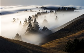 Trees, mountains, fog, morning