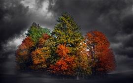 미리보기 배경 화면 나무들, 밤, 구름, 가을