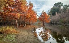 Árboles, río, otoño