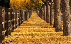 Trees, yellow leaves, path, fence, park, autumn