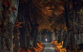 Preview wallpaper Trees, yellow leaves, road, channel, man, autumn