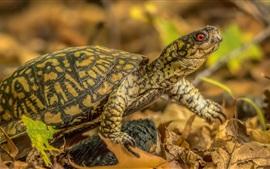 Tartaruga no outono