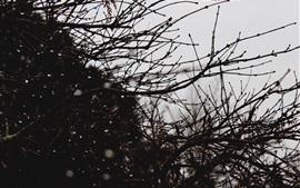 미리보기 배경 화면 나뭇 가지, 물방울, 황혼