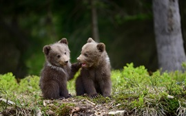 Preview wallpaper Two bear cubs playful
