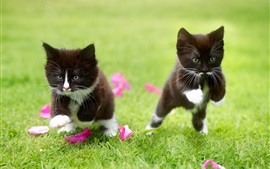 Preview wallpaper Two black kitten running in the grass