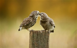 Preview wallpaper Two cute owls kiss