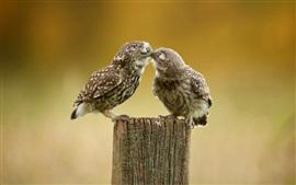 Dois bonitos beijos de corujas