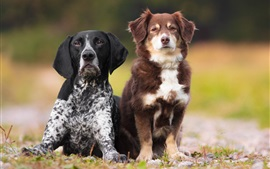 Dos perros, negro y marrón