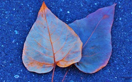Two dry leaves on ground