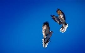 Two flight birds, blue sky