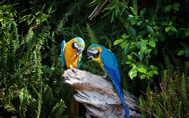 Preview wallpaper Two parrots, stump, plants