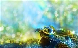 Gouttes d'eau, feuille verte, brillance
