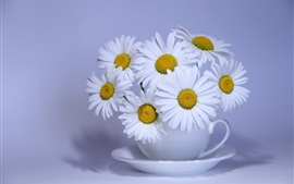Preview wallpaper White chamomile flowers, cup