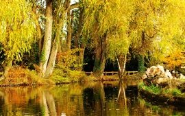 Preview wallpaper Willow, autumn, park, pond