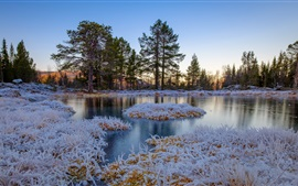 Preview wallpaper Winter, frozen, grass, trees, pond, Norway