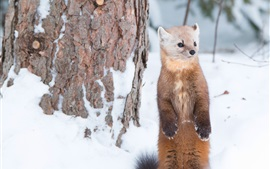 Preview wallpaper Winter, marten stand, snow