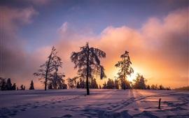 Hiver, coucher de soleil, neige, arbres, crépuscule