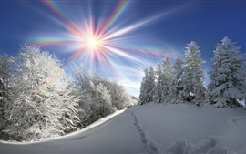 Preview wallpaper Winter, thick snow, trees, sun rays, rainbow colors