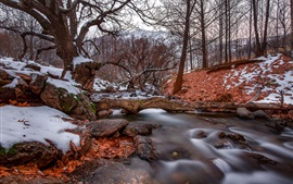 Preview wallpaper Winter, trees, creek, snow, cold