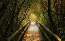 Ponte de madeira, caminho, árvores, outono, Alemanha