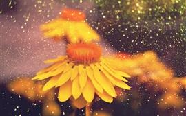 Fleurs jaunes, pluie, gouttes d'eau