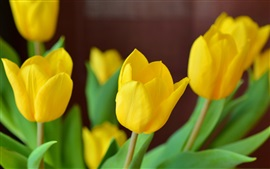 Preview wallpaper Yellow tulip flowers close-up, blurry background