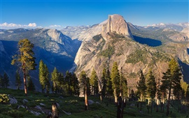 Yosemite National Park, USA, trees, mountains, nature landscape