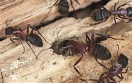 미리보기 배경 화면 개미 매크로 사진