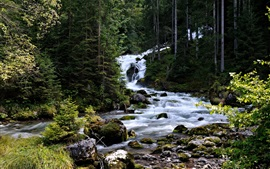 Preview wallpaper Austria, Hallstatt, coniferous, trees, forest, stream, stones