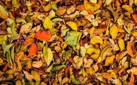 Autumn, dry leaves on ground
