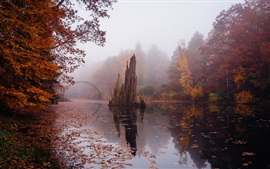Preview wallpaper Autumn, stone bridge, river, trees, fog, Germany