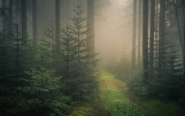 Baden-Wurttemberg, Black Forest, fog, Germany