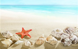 Preview wallpaper Beach, seashell, starfish, sea