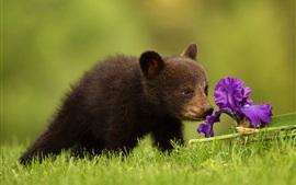 Цветок медвежонка и ириса