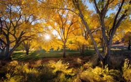 Preview wallpaper Beautiful autumn, trees, yellow leaves, sun rays