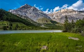 Alpes Berneses, grama, lago, árvores