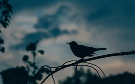 Птица, силуэт, сумерки