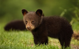 Preview wallpaper Black bear cub in the grass