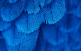 Blue feathers texture