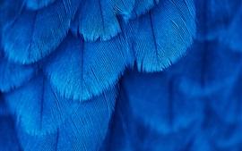 Textura de plumas azules