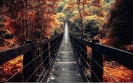 Preview wallpaper Bridge, trees, forest, autumn