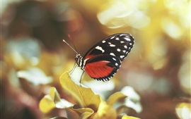 Preview wallpaper Butterfly, wings, leaves