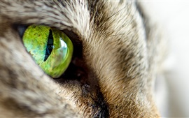 Olhos verdes de gato close-up