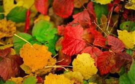 Coloridas hojas de otoño, amarillo, rojo, verde