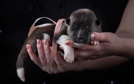 Filhote de cachorro bonito de dormir nas mãos