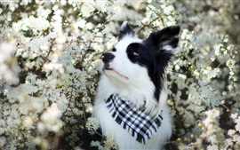 Preview wallpaper Dog, flowers, scarf, spring