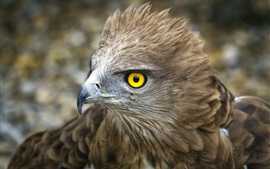 Preview wallpaper Eagle, head, feathers, yellow eyes, beak